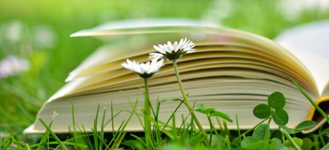 daisies, book and three leave clover in the grass
